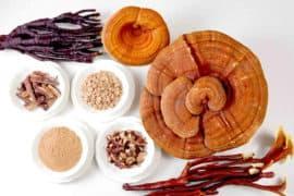 medicinal adaptogenic mushrooms reishi