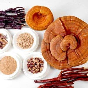 Top 7 Medicinal Mushrooms and their Health Benefits